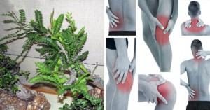 , Asombroso: 7 hierbas para reemplazar Analgésicos sin efectos secundarios …, Alimenta y Cura