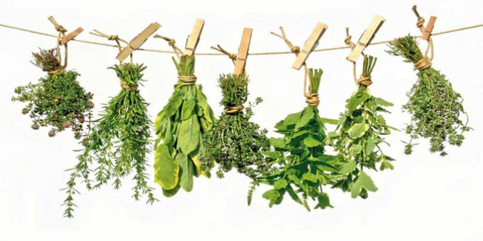 , Cada planta se especializa en entregar un aporte a tu salud., Alimenta y Cura
