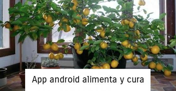 , Cómo cultivar un árbol de limón desde la semilla fácilmente en tu propia casa, Alimenta y Cura
