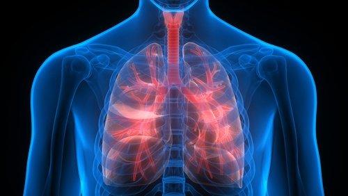 , Cómo limpiar el sistema respiratorio con aceite de orégano, Alimenta y Cura