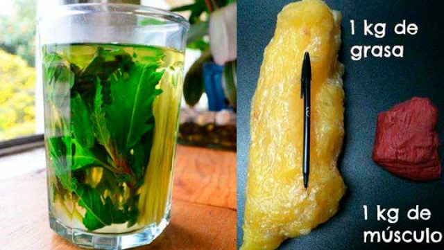 , Derrite 1 KG de grasa de tu cuerpo sin mucho esfuerzo solo con esta excelente bebida., Alimenta y Cura