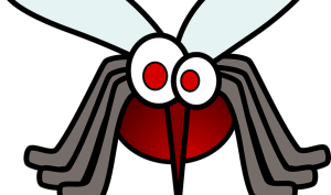 , Picaduras de insectos: alivia el picor con remedios caseros, Alimenta y Cura