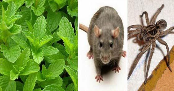 , Si tienes esta planta en tu casa, nunca verás ratones, arañas y otros insectos otra vez!, Alimenta y Cura