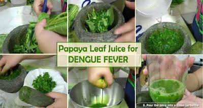 , Tratamiento para la fiebre del dengue en sólo 48 horas con el jugo de hojas de papaya!, Alimenta y Cura