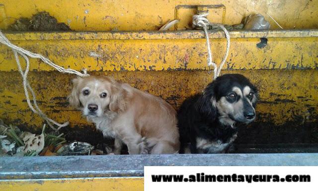 , Se querían deshacer de sus perros y los arrojaron al camión de la basura, pero ahora sus vidas han cambiado, Alimenta y Cura