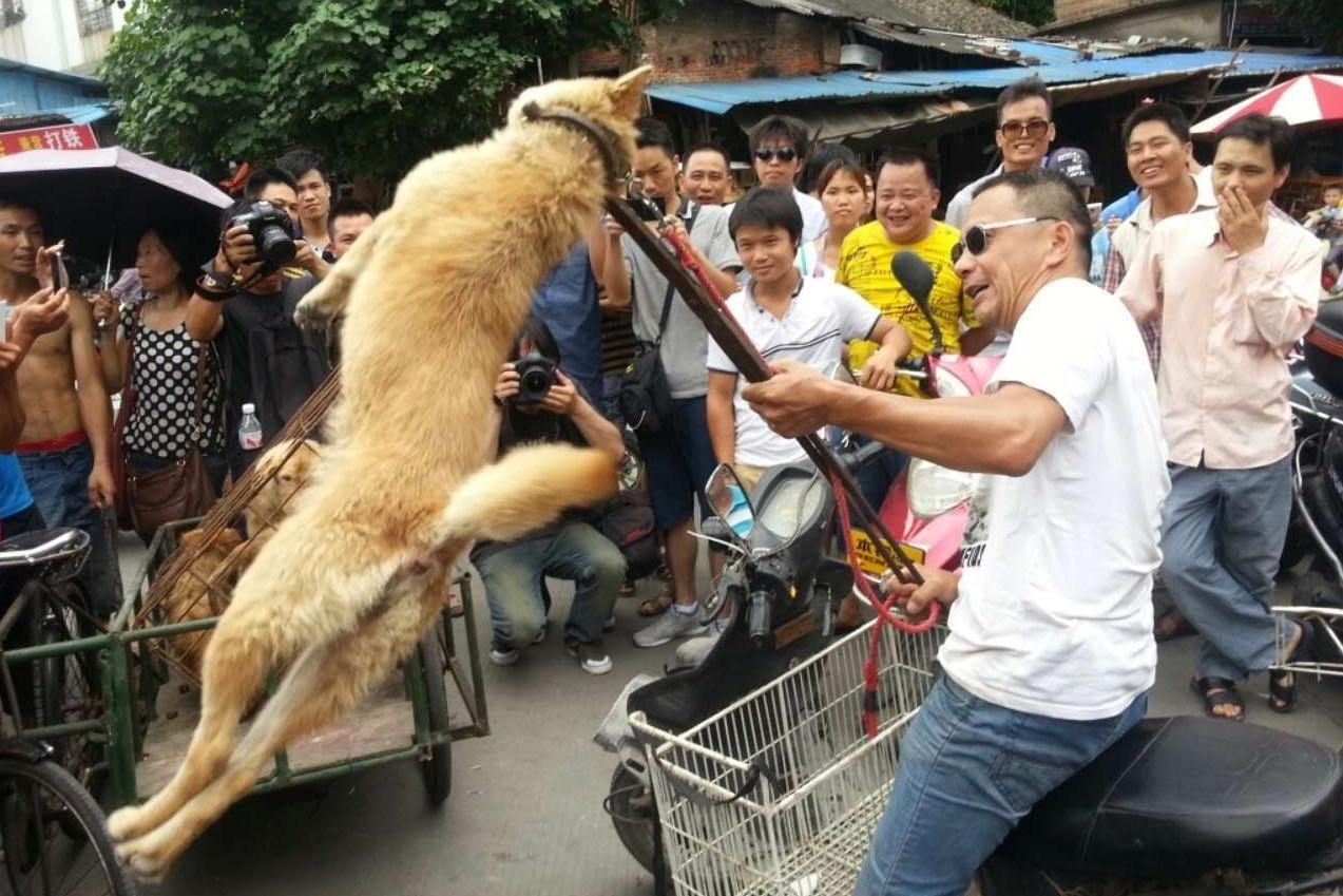 , FIRMA AQUI ¡Este festival chino de carne de perro debe pararse… Tomemos acción YA!, Alimenta y Cura