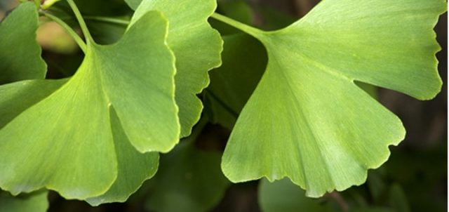 , Las propiedades y beneficios de esta planta son muy importantes para la salud, Alimenta y Cura