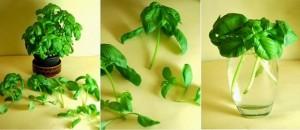 8 vegetales que puedes cultivar una, y otra y otra vez.