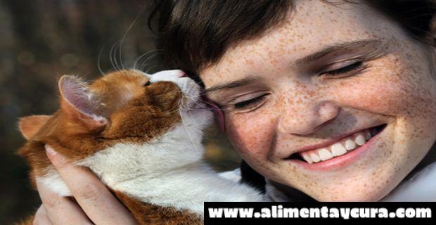 , ¡ATENCIÓN! Se expande esta enfermedad que tus gatos podrían transmitir a tus niños., Alimenta y Cura