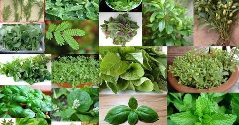 15 Plantas Y Hierbas Para Purificar Los Pulmones Y Mejorar La Respiración
