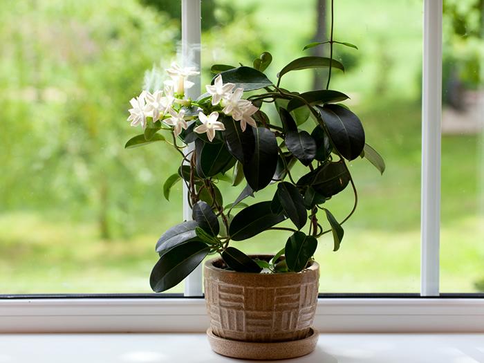 , Plantas que puedes tener en tu habitación y que te ayudan a dormir mejor, Alimenta y Cura