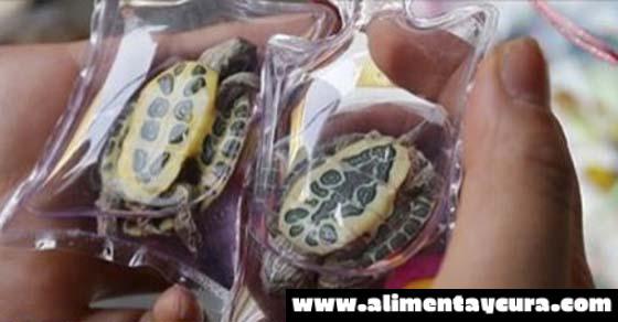 Animales vivos están atrapados en el interior de diminutas bolsas de plástico en China y se venden como joyería