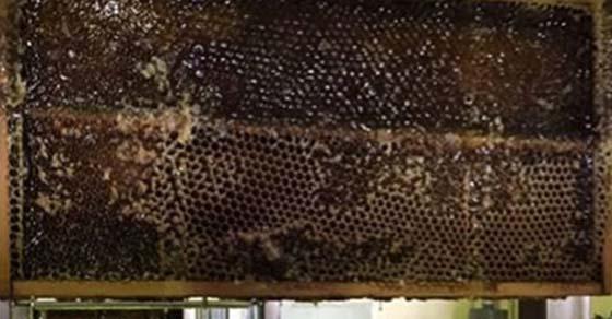 , Misteriosa miel descubierta que mata a todas las bacterias que lanzan los científicos, Alimenta y Cura