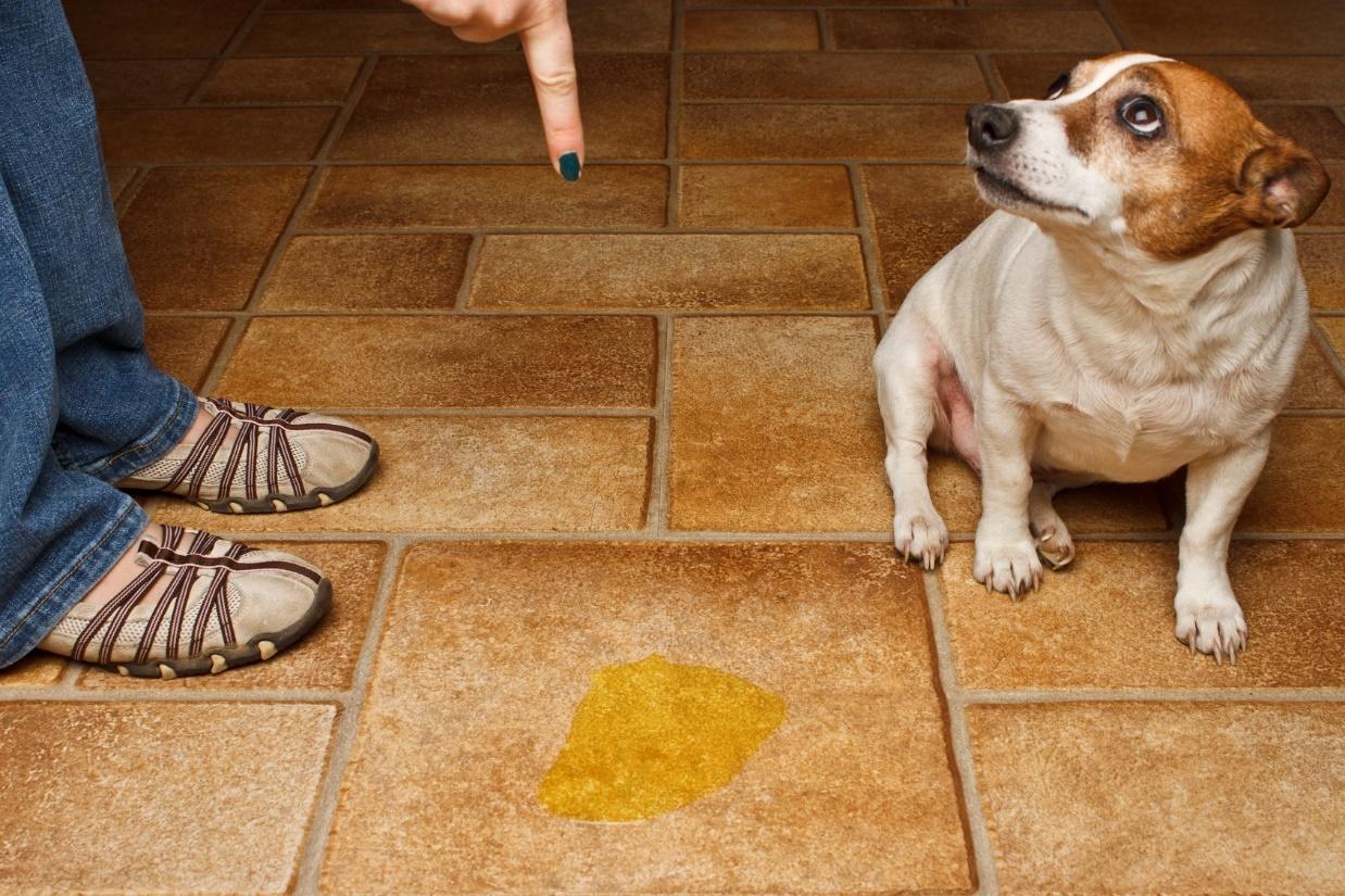 Santo remedio para ahuyentar y evitar que tu perro se for Ahuyentar gatos jardin