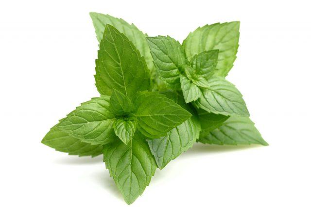, Si en tu casa tienes esta planta, nunca más tendrás ratones, arañas u otros insectos., Alimenta y Cura