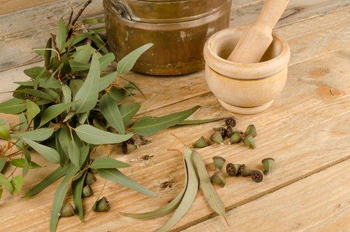 , 5 remedios herbales para combatir los piojos y liendres naturalmente, Alimenta y Cura