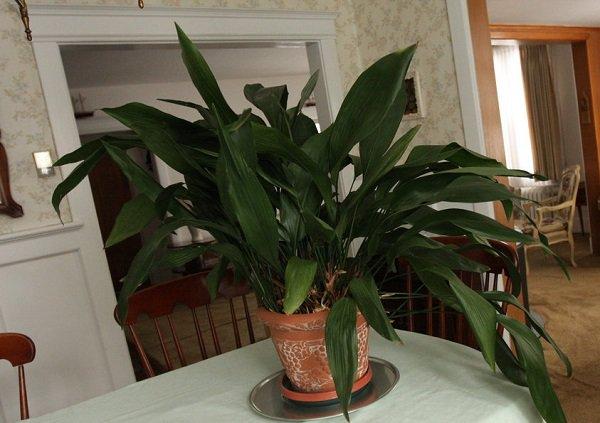 , 8 plantas para decorar la cocina que darán productividad, Alimenta y Cura