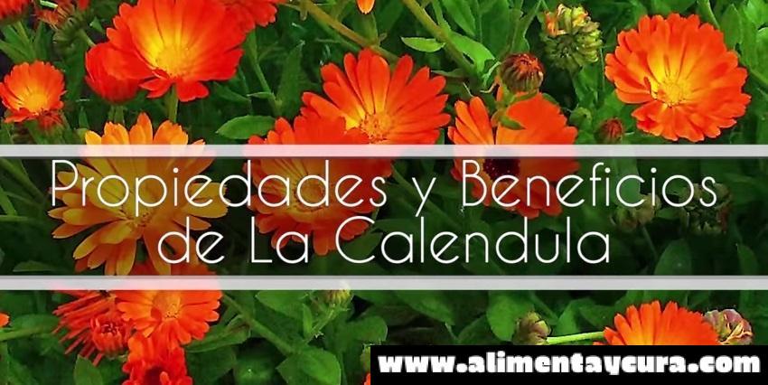 , ACEITE DE CALÉNDULA CONOCIDO POR SUS PROPIEDADES ANTIINFLAMATORIAS Y CALMANTES, Alimenta y Cura