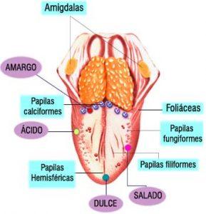 , Ageusia – Que es, definición, causas, síntomas, tratamiento, Alimenta y Cura