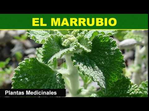 , Esta planta la tienes de adorno pero podría salvarte la vida mil veces y no lo sabias!, Alimenta y Cura, Alimenta y Cura