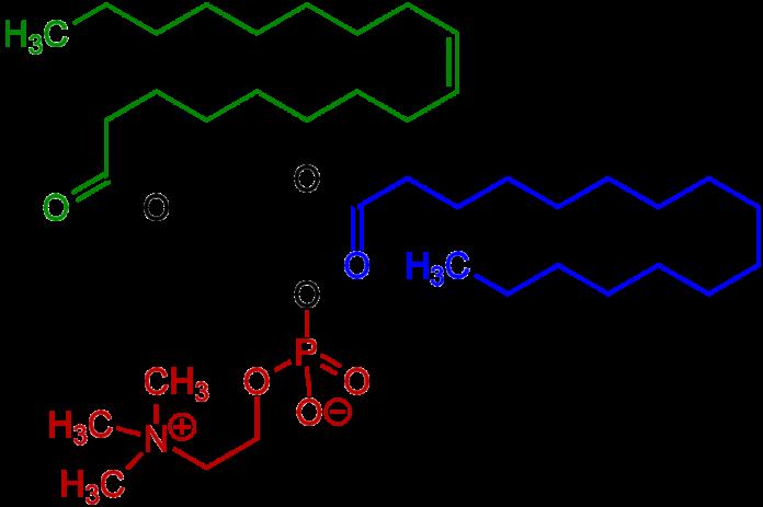 , Fosfatidilcolina – Que es, usos, contraindicaciones, beneficios, dosis, Alimenta y Cura, Alimenta y Cura