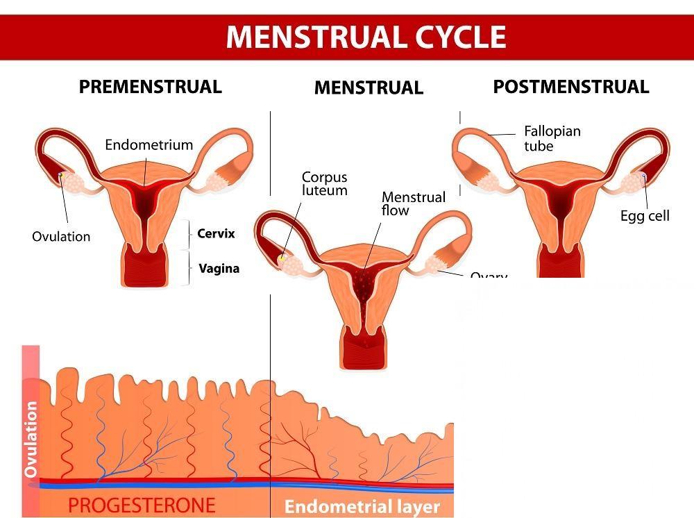 , Tu guía para conocer las hormonas del embarazo, Alimenta y Cura