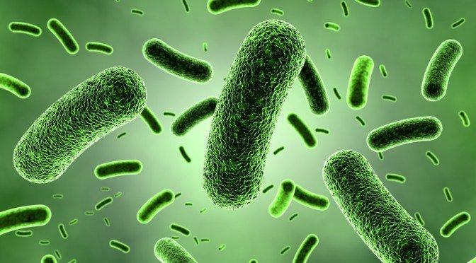 Bacterias en el cuerpo