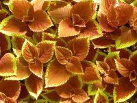 , Remedios caseros para el colon irritable, Alimenta y Cura