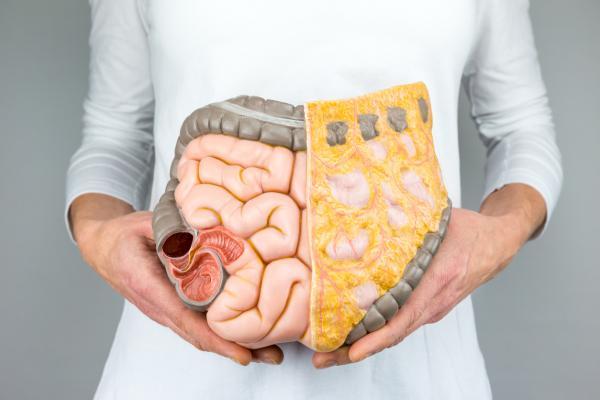 , Remedios caseros para el duodeno inflamado – los más efectivos, Alimenta y Cura, Alimenta y Cura
