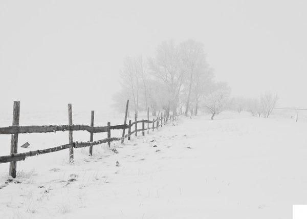 , 10 remedios naturales para cuidar nuestra salud en invierno, Alimenta y Cura