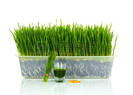 Vidrio a tiros de la hierba de trigo con trigo corte fresco hierba y de trigo Foto de archivo - 30557692