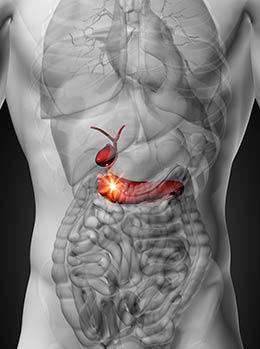 , Conoce el páncreas y sus funciones, Alimenta y Cura