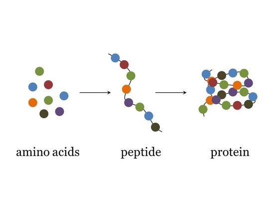 , Los 20 aminoácidos esenciales que componen las proteínas, Alimenta y Cura, Alimenta y Cura