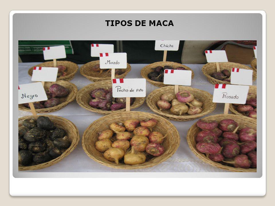 , Maca Andina – Qué es, Propiedades, Beneficios y dónde comprarla, Alimenta y Cura, Alimenta y Cura