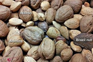 , Omega 3 – Que son, usos, contraindicaciones, alimentos, comprar, Alimenta y Cura, Alimenta y Cura