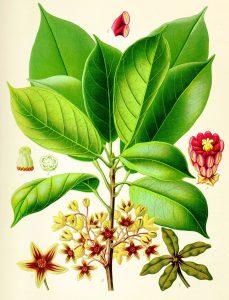 , Plantas medicinales – Que son, para que sirven, tipos, usos, Alimenta y Cura, Alimenta y Cura