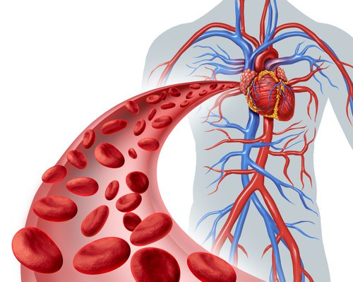 , Aprende a Limpiar los Vasos Sanguíneos de Colesterol en Menos de un Mes!!!, Alimenta y Cura