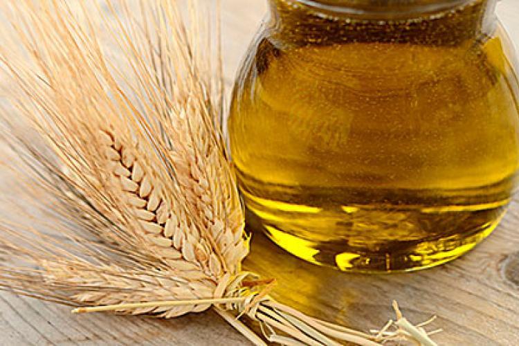 , Aceite de Germen de Trigo ¿Cuáles son sus virtudes o desventajas?, Alimenta y Cura, Alimenta y Cura