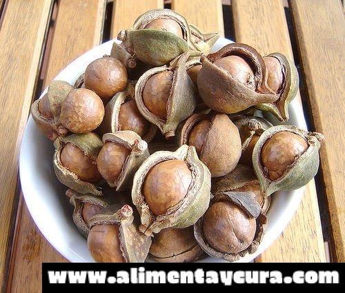 , Beneficios de las nueces de Macadamia, Alimenta y Cura, Alimenta y Cura
