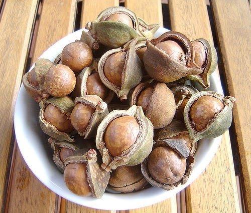 , Beneficios de las nueces de Macadamia, Alimenta y Cura