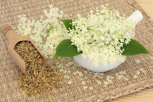 , Cómo mejorar la circulación sanguínea con 5 remedios herbales, Alimenta y Cura, Alimenta y Cura