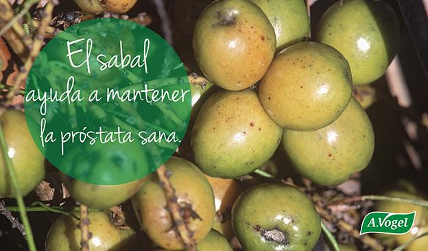 , El Sabal Serrulata ayuda a mantener sana la próstata, Alimenta y Cura