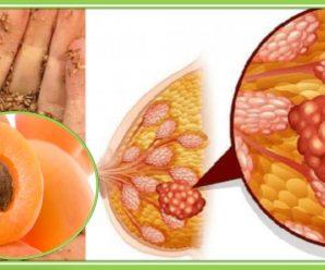 Las Cuatro Semillas Anti Cancerigenas Mas Poderosas que Existen