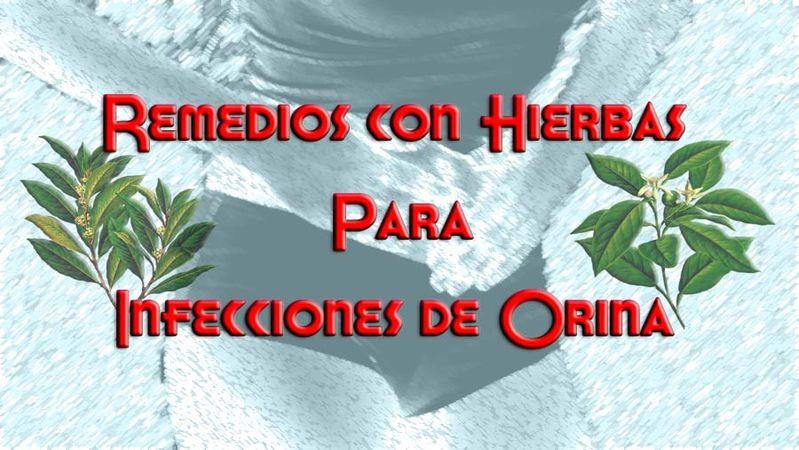 , Remedios para Infección de Orina, Caseros con Hierbas Naturales, Alimenta y Cura, Alimenta y Cura