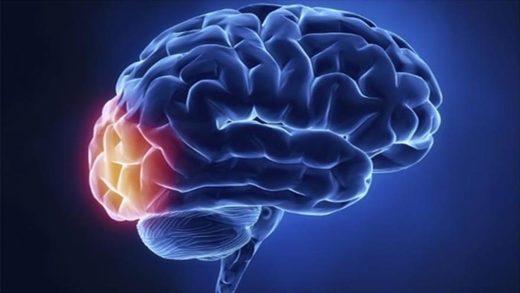, 7 vitaminas para cuidar de tu cerebro, Alimenta y Cura, Alimenta y Cura