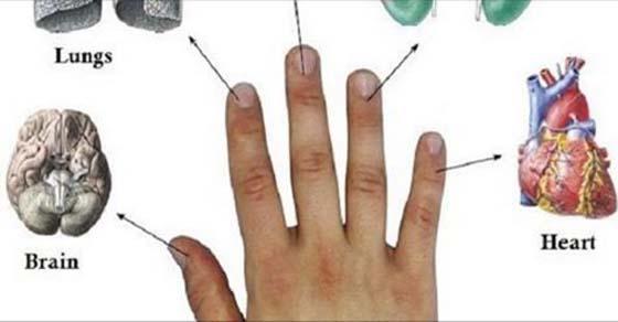 Cada dedo está conectado con 2 órganos: métodos japoneses de sanación en 5 minutos!