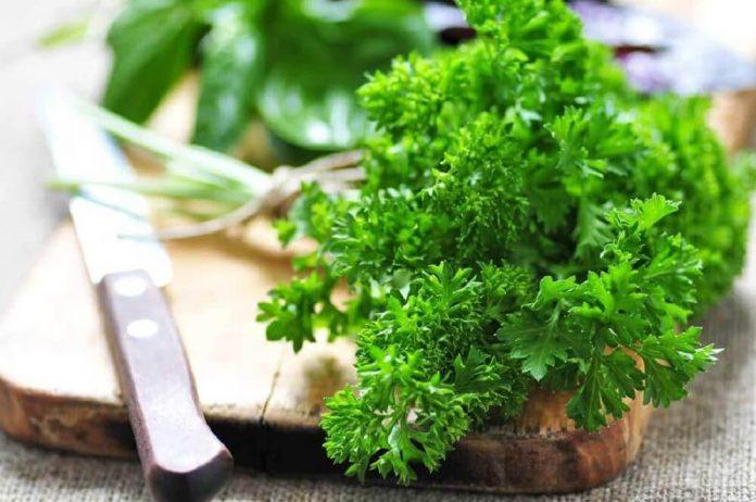 , Refresca el aliento de tu boca con 6 plantas medicinales, Alimenta y Cura
