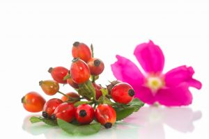 , Beneficios del Té de Rosa Mosqueta – preparación y efectos, Alimenta y Cura