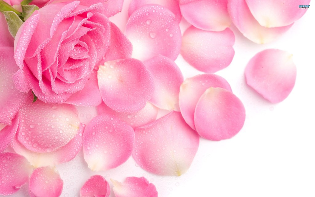 Rose Flower Backgrounds Wallpapers Black Hd Wallpapers