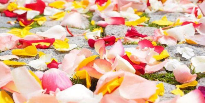, Pétalos de rosas rojas beneficios para la salud y aliado de tu belleza, Alimenta y Cura